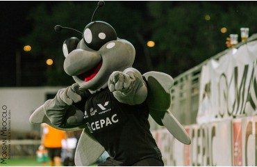 Mascotte Marius Provence Rugby